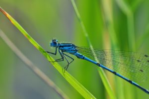The Dragonfly Effect: Opening To Abundance